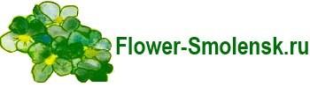 Цветы Смоленск